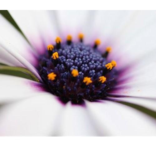 Cho hoa cỏ mềm mại hơn