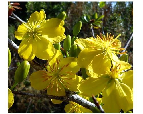 Chụp hoa lá, côn trùng với đèn flash
