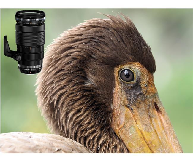 Những ống kính thích hợp nhất cho máy ảnh Panasonic GH5s