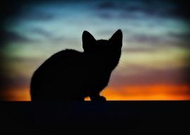 Cài đặt để chụp ảnh ngược sáng kiểu silhouettes
