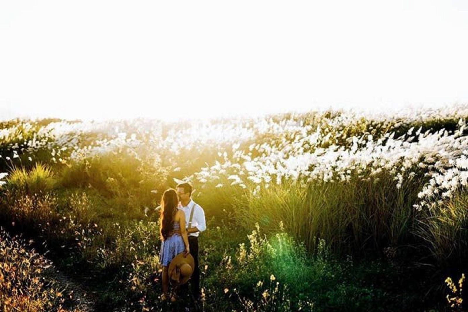 Đẹp đến lịm cả tim với cánh đồng cỏ lau tại Đà Nẵng
