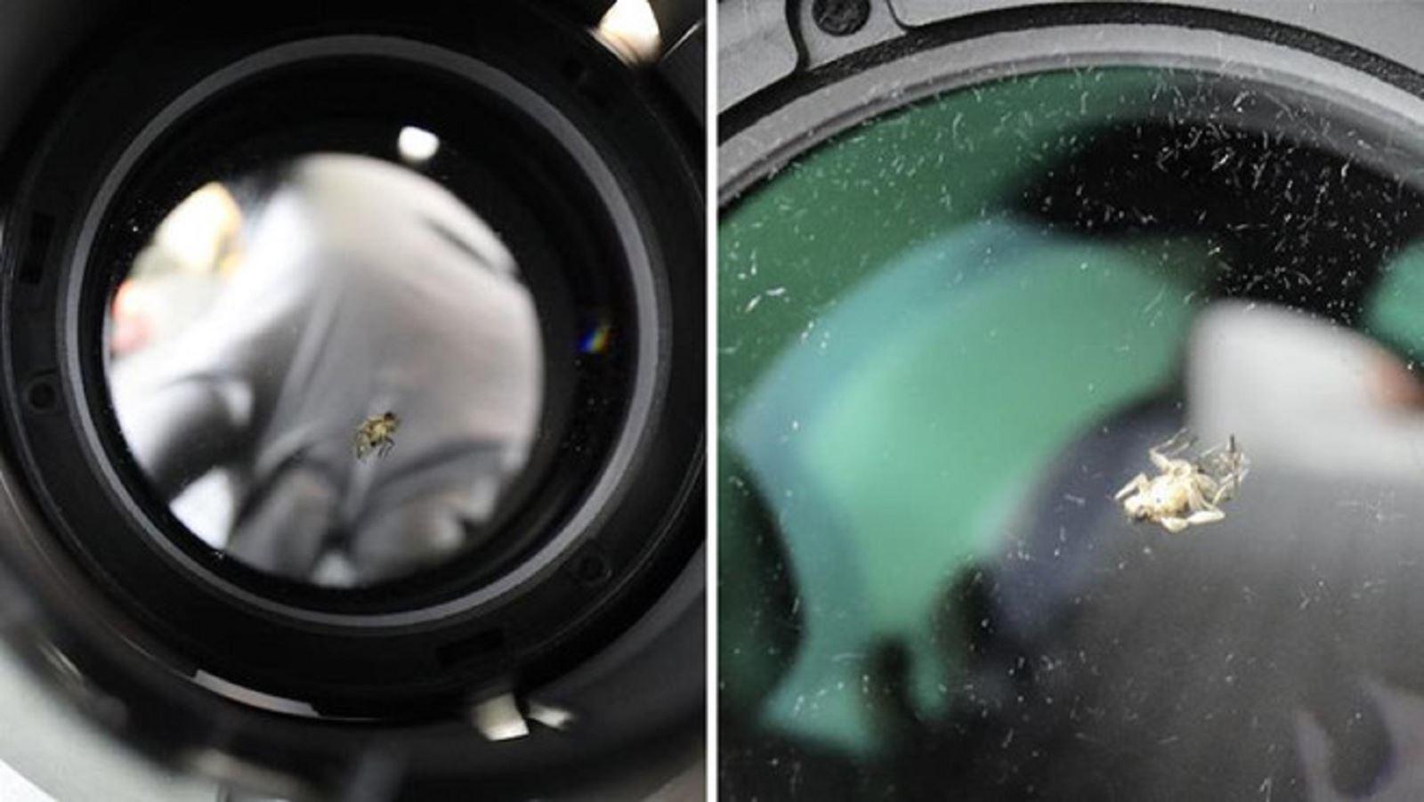 Con ruồi chui vào ống kính camera 40 triệugây nhức đầu chuyên gia