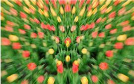Tìm hiểu về hiệu ứng mờ nhòe trong nhiếp ảnh